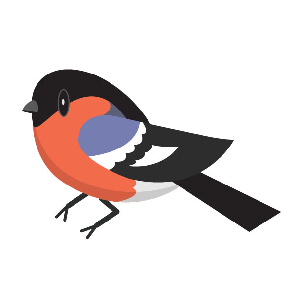 And, finally, in tenth place, the bullfinch!