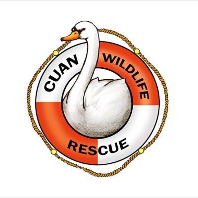 Cuan Logo