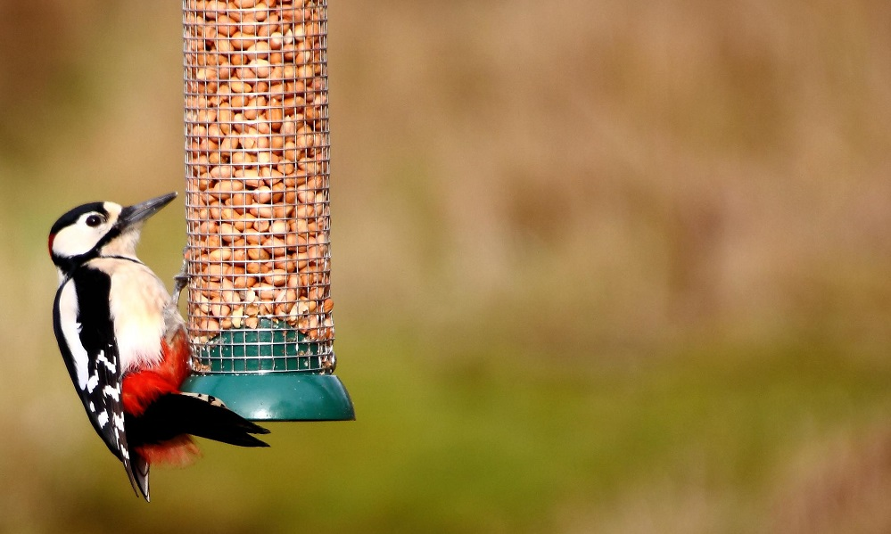 See information about the Great Spotted Woodpecker