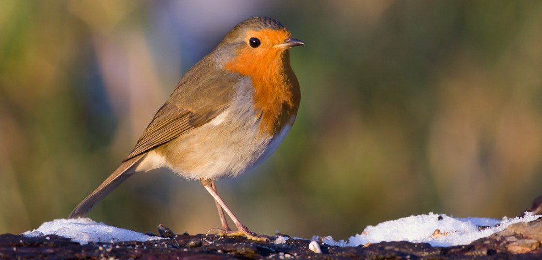 Winter is coming How to help your garden birds through the cold