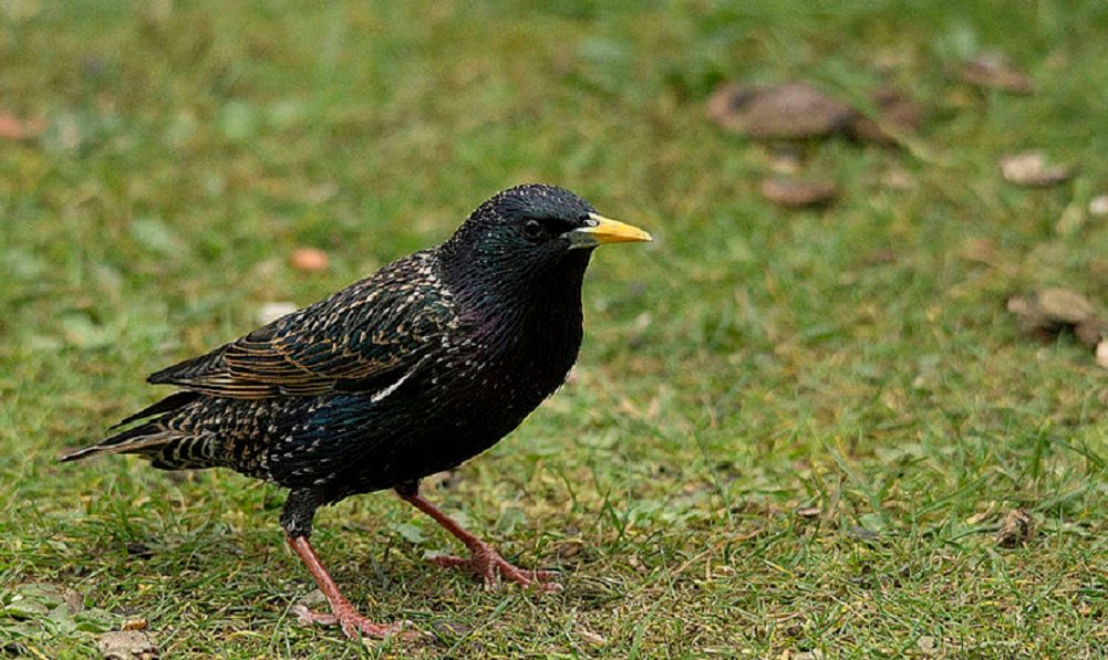 See information about the Starling