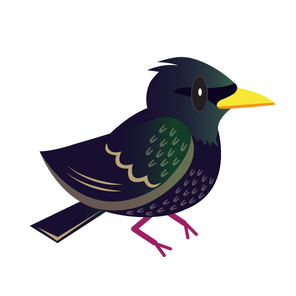 In eighth place, the good old starling.