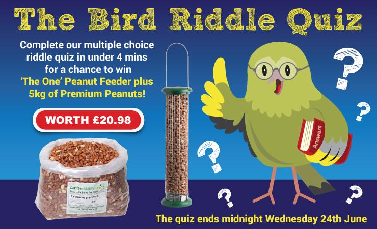 bird_riddle_quiz_740x450