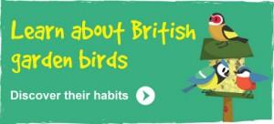 Learn all about British garden birds