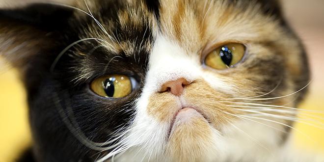 Ban the cat