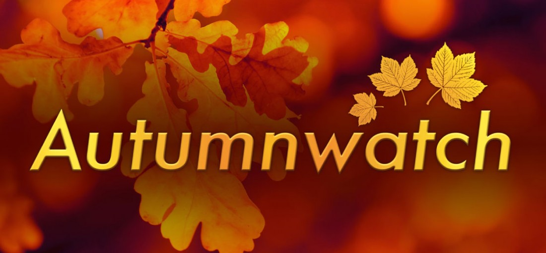Autumnwatch-logo