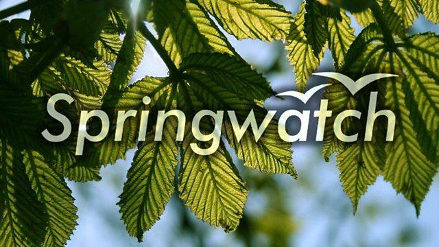 BBC Springwatch 2016