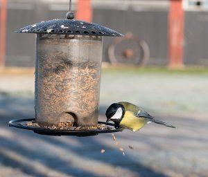 Bird feeding on seeds