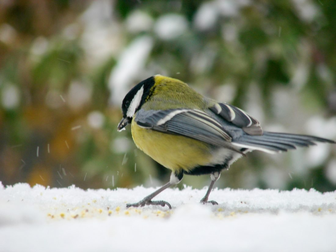 What to feed your birds in Winter