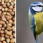About Wild Bird Peanuts