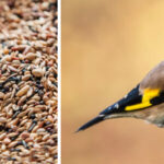 All about seed mixes